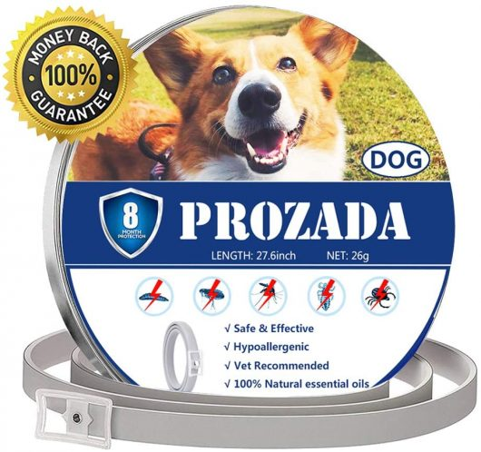 Collar Antiparasitario para Perros (8 Meses)